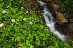 Beautiful mountain waterfall Royalty Free Stock Image