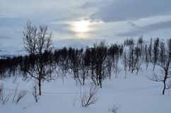 Beautiful mountain winter landscape in the arctic circle wilderness with small mountain birch trees and sunshine behind dense clou Royalty Free Stock Photography