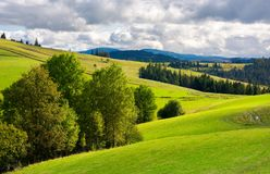 Grassy rolling hills with trees. Beautiful mountainous countryside. grassy rolling hills with trees. mountain ridge in the distance. wonderful early autumn Stock Photos