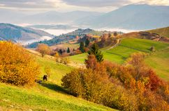 Beautiful mountainous countryside in morning fog. Beautiful vivid color of autumn at sunrise stock photos