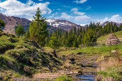 Beautiful mountainous countryside in springtime. Beautiful mountainous countrye in springtime. trees and wooden fence on hille near the small brook. spruce Stock Images