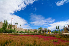 Beautiful mountains with flower field at Leh Stock Photos