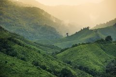 Beautiful mountains In the province of Nan It is beautiful, fresh, green and full of fog on the top of the hill with paddy fields Royalty Free Stock Photos