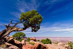 Beautiful mountains and tree landscape Royalty Free Stock Photo
