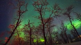 Beautiful movement of Aurora Borealis over trees stock video