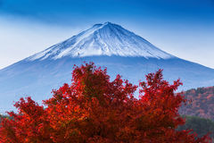 Beautiful Mt Fuji with Red Maple tree in Autumn Royalty Free Stock Images