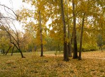 Beautiful multi-colored trees and the background in the city autumn Park.  Royalty Free Stock Photography