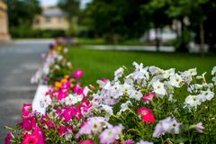 Beautiful multicolored alley of flowers stock photos