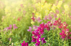 Beautiful and multicolored flower in park stock photos
