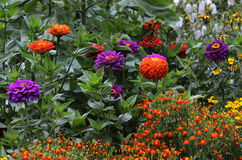 Beautiful multicolored flowerbed in garden Stock Images