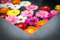 Beautiful multicolored flowers in water. Royalty Free Stock Photos