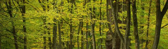 Beautiful multicolored foliage in forest Royalty Free Stock Image