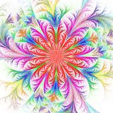 Beautiful multicolored fractal flower. Collection - frosty patte Royalty Free Stock Photography