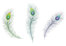 Beautiful multicolored sparkling peacock feathers. Green, blue and purple carnival peacock feather Stock Photos