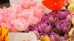 Beautiful multicolored variety of tulips in a large bouquet on flower market of Amsterdam, the Netherlands. Tulip symbol. Beautiful multicolored variety of stock video