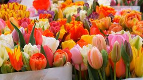 Beautiful multicolored variety of tulips in a large bouquet on flower market of Amsterdam, the Netherlands. Tulip symbol. Beautiful multicolored variety of stock footage