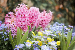Beautiful multiflowers bed Royalty Free Stock Photos
