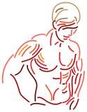 Beautiful muscles. Line art brush stroke image of human body muscles stock illustration