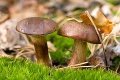 Beautiful mushroom Stock Images