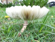 Beautiful Mushroom Royalty Free Stock Image