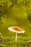 Beautiful mushroom in fantastic wood. Beautiful little mushroom in fantastic wood Royalty Free Stock Images