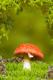 Beautiful mushroom in fantastic wood Royalty Free Stock Photos