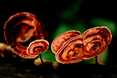 Beautiful  mushroom forest Royalty Free Stock Photos
