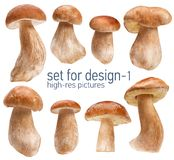Beautiful mushrooms Royalty Free Stock Images