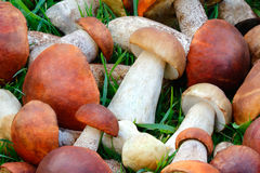 Beautiful Mushrooms On The Grass In The Forest. Stock Image