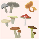 Beautiful mushrooms set. Flat style. Beautiful mushrooms set. Vector magic unusual nature elements, isolated on white Royalty Free Stock Image