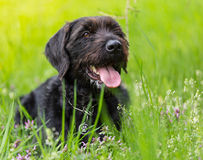 Beautiful mutt black dog Amy in forest hut Royalty Free Stock Photo