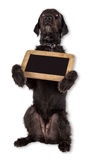 Beautiful mutt black dog Amy holding small black table. Stock Photo