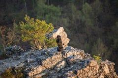 Beautiful mutt black dog Amy on mountain rock. Stock Photo