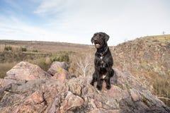 Beautiful mutt black dog Amy on mountains Stock Photos