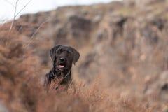 Beautiful mutt black dog Amy on mountains Royalty Free Stock Photo