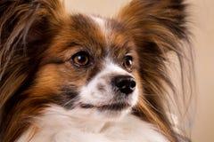 Muzzle of a dog, close-up