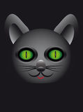 Beautiful and mysterious cat on a black background Stock Images