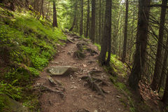 Beautiful mysterious forest with a footpath Stock Image