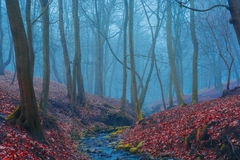Beautiful mystery forest with fog and a stream Royalty Free Stock Photography