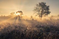 Beautiful mystical landscape Royalty Free Stock Image