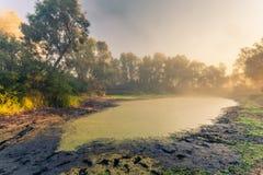 Beautiful mystical landscape Royalty Free Stock Photo