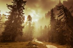 Beautiful pine forest and sunbeams Stock Images