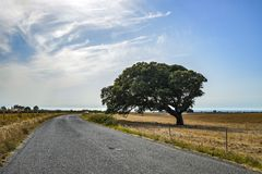 Beautiful mystique tree beside the road on a field Royalty Free Stock Photo