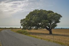 Beautiful mystique tree beside the road on a field Royalty Free Stock Images