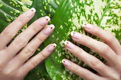 Beautiful nails against plant Stock Photos