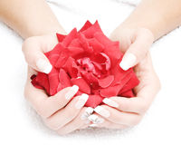Beautiful nails and fingers. Manicured fingers holding red rose petals  on white towel Royalty Free Stock Photography