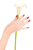 Beautiful nails and fingers with flower. Closeup image of beautiful nails and fingers with flower over isolated white Royalty Free Stock Photos