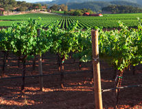 Beautiful Napa County Vineyard Royalty Free Stock Photo