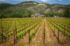 Beautiful Napa Valley Vineyards California. Vast amounts of vineyards can be seen across California. Some folk even grow traditional style crops in their back stock images