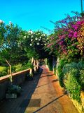 The beautiful narrow street of Capri on an Italian island in the Mediterranean royalty free stock images